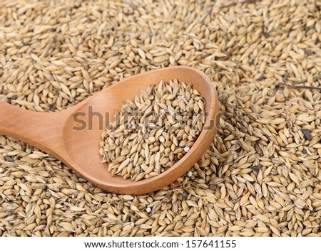 Closeup of wheat grains with wood spoon. Whole background.