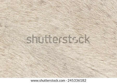 Closeup of white fur pattern