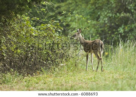 Closeup of wild deer in a meadow