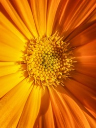 Closeup of yellow Flower .natural background, bright yellow flower,flower closeup.