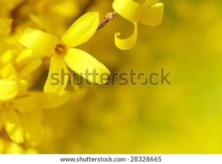 Closeup of yellow tree flower