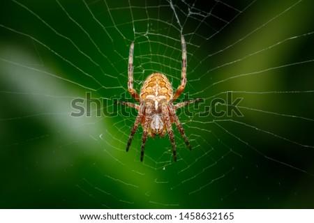 Photo of  Closeup on a cross spider, also called european garden spider, diadem spider or pumpkin spider