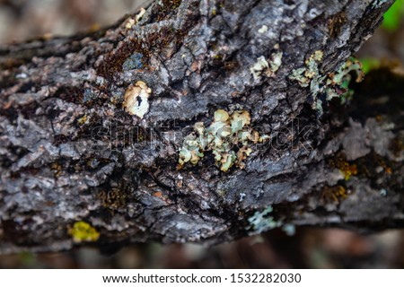 Closeup on gray bark of a tree trunk with moss in a park on nature. Freshness, naturalness, backgrounds and textures.