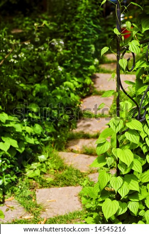 Closeup on green yam vine climbing on wrought iron arbor