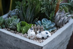 Closeup on mixed succulents planted in a square cement pot with cows figurine decorations.