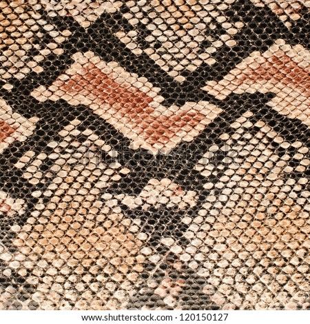 Closeup on snake skin pattern background.