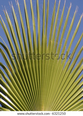 Closeup photo of a green palm frond, common along the coast of Southern California, and Baja.