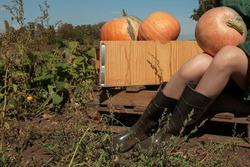 Closeup photo of the woman legs in boots with pumpkin sitting in autumn field, harvest concept