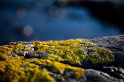 CloseUp photo Stones and Rocks on a seashore covered with yellow moss with blue sea background