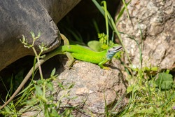 Closeup photography of green lizzard