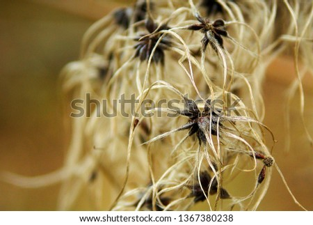 Closeup pic of strange loocing plant with gold blurry beckgraund.