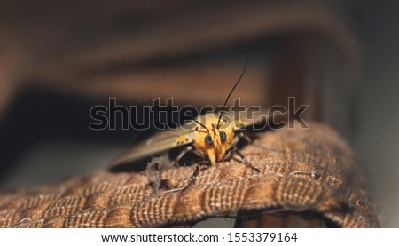 closeup picture of a moth