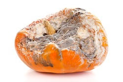 Closeup picture of a rotten pumpkin. Isolated on white background.