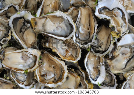 closeup picture of fresh oyster