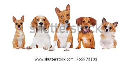 Closeup picture of yellow dogs of different breeds standing on the blank board