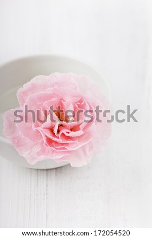 Closeup pink flower in water drops on a white surface
