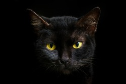 Closeup portrait black cat The face in front of eyes is yellow. Halloween black cat  Black background