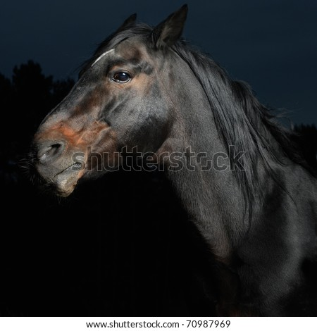 Closeup portrait black horse in the dark