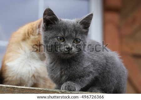 closeup portrait of a cute kitten on the porch in the garden #496726366