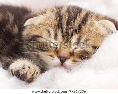 Closeup portrait of a cute sleeping kitten