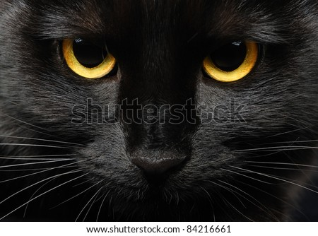 Closeup portrait of a Halloween black cat