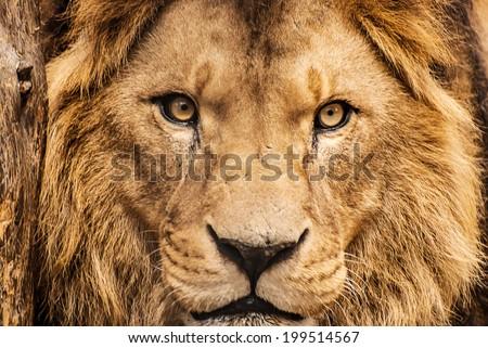 closeup portrait of an african...