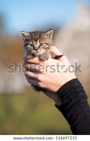 closeup portrait of kitten in woman hands