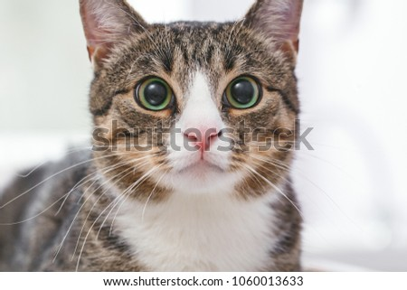 Closeup portrait of scared and funny cat #1060013633