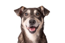 Closeup portrait photo of an adorable mongrel dog isolated on white