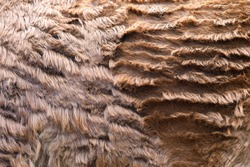 Closeup real Llama skin texture. Animal fur background texture image background