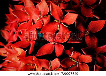 closeup red small flower background #720078340