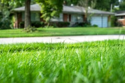 Closeup shallow focus green grass lawn in sunshine, healthy lawn, suburban ranch house in background, tall fescue, thick, low angle, residential neighborhood, suburbs, close neighbors, privacy