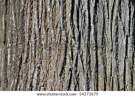 Closeup shoot of bark of old tree.