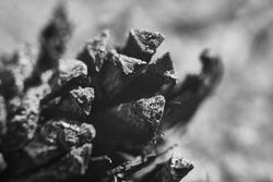 Closeup shoot of fallen pine