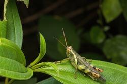 closeup shot of a green grasshopper in nature
