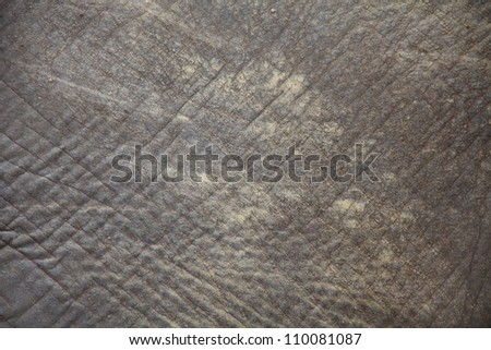 closeup shot of an elephant skin