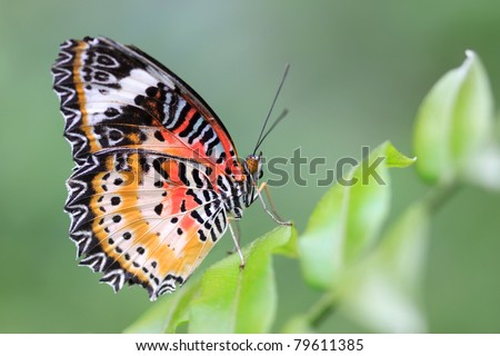 Closeup shot of beautiful butterfly on a branch