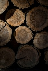 Closeup shot of circular wood logs, stacked neatly into a pile