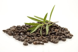Closeup shot of coffee beans against white background with Tarragon herb on top