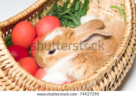 closeup shot of easter bunny in basket with red eggs - stock photo