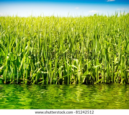 closeup shot of green grass over blue sky reflected in the water