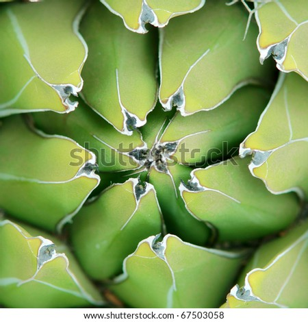 closeup shot of green succulent plant agave