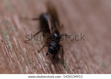 closeup shot of House fly, Fly, House fly on leaf