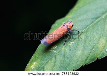 closeup shot of leafhopper at night #783128632