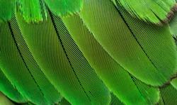 closeup shot of parrots feather or parakeet feather