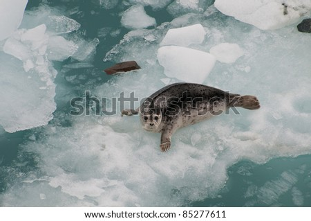 Closeup shot of wild seal on huge iceberg.