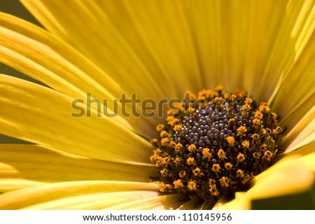 Closeup shot of yellow flower's pistils - stock photo