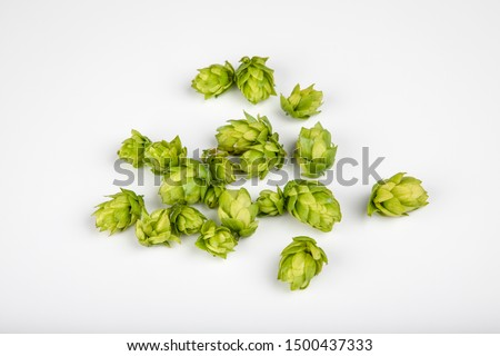 Closeup single umbels of hops from Bavaria isolated on background white
