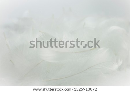 closeup soft white feathers background