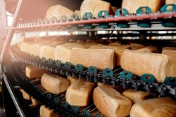 Closeup Square fresh bread cools down on conveyor automatic production line bakery after stone oven.